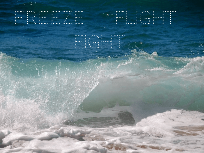 Freeze, flight or fight